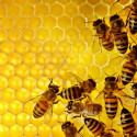 Honey and Enzymes