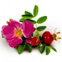 Масло розы Москета